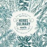 Kulinarny ziele i pikantność sztandaru szablon Wektorowy tło dla projekta menu, pakuje, przepisy, etykietka, gospodarstwo rolne r ilustracji