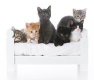 kull av kattungar Royaltyfria Bilder