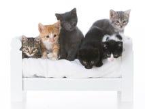 kull av kattungar Royaltyfri Foto