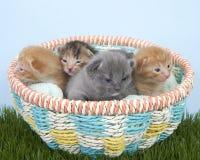 Kull av nyfödda kattungar två gamla veckor i en korg Arkivfoto