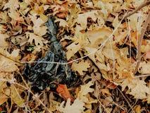 Kull, avfall i skogen i sen nedgång på att fotvandra slingor till och med träd på den gula gaffeln och Rose Canyon Trails i Oquir Royaltyfri Bild