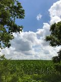 kull för fält för bakgrundshavreafton Arkivbilder