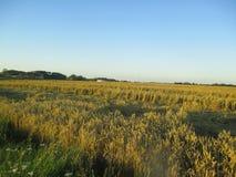 kull för fält för bakgrundshavreafton Fotografering för Bildbyråer