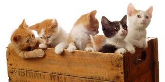 kull för fem kattungar Arkivbild