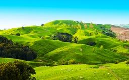 Kullar av Nyaet Zeeland Royaltyfria Foton