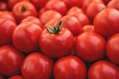 Kullar av tomater Arkivbild