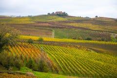Kullar av vingårdar i höst i Piedmont, Italien fotografering för bildbyråer