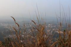 Kullar för en siktsform ner staden till och med det torkade övre gräset Virajpet från Karnataka royaltyfri fotografi