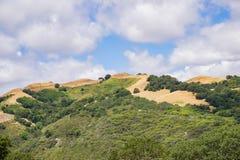 Kullar i den Rancho Kanada del Oro öppet utrymmesylten, södra San Francisco Bay område, San Jose, Kalifornien royaltyfri bild