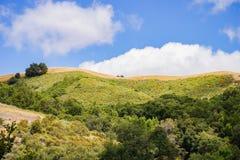 Kullar i den Rancho Kanada del Oro öppet utrymmesylten, södra San Francisco Bay område, San Jose, Kalifornien royaltyfria bilder