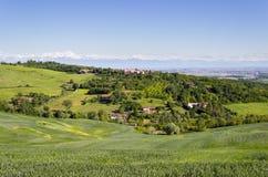 Kullar landskap med veteåkrar på en vårmorgon, Monferrato kullar, Piedmont, Italien Fjällängar på bakgrunden Arkivfoto