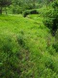 Kullar och fält royaltyfri foto