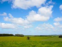 Kullar som täckas av grönt gräs Arkivbild