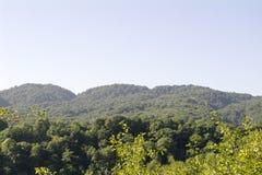 Kullar som täckas med gröna träd i utlöparen av Kaukasuset Arkivbilder