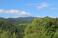 Kullar som täckas med vårgrönska carpathian ukraine Arkivbild
