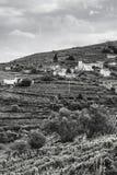 Kullar som täckas med vingårdar i Portugal Arkivbilder