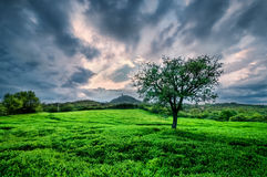 kullar tuscany Arkivbilder