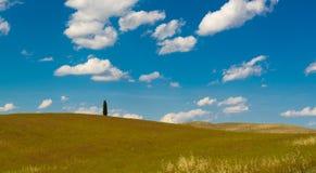 Kullarna av Montalcino, en vinstad, Siena Royaltyfria Bilder