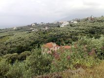Kullarna av olivträd efter Sorrento Royaltyfri Foto