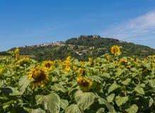 Kulle av det Sancerre vinområdet Royaltyfri Bild