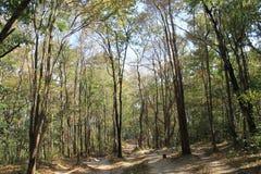 kulle för skog för ้ Royaltyfri Foto