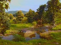 Kulle för träd för landskapflodström Royaltyfri Foto