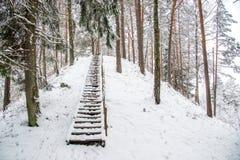 Kulle i vinterskog Arkivbild