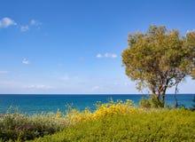 Kulle med ett träd och yelllowblommor på bakgrunden av himmel royaltyfri bild