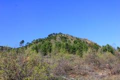 Kulle med träd och vegetation Royaltyfri Fotografi