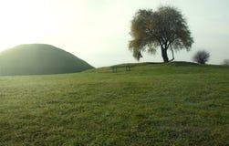 Kulle och ett träd Arkivfoto