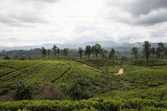 Kulle- och tekolonier Ella Sri Lanka Arkivfoto