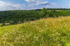 Kulle som planteras tätt med örter och fältblommor, och enkla träd under en blå molnig himmel Arkivfoton
