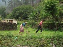 Kullejordbruk i Uttrakhand, Indien Arkivfoton
