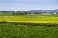 Kullelandskap på våren med himmel och ängen Royaltyfria Foton