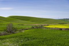 Kullelandskap på våren med himmel och ängen Fotografering för Bildbyråer