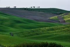 Kullen av Tuscany, paradis är därefter CXIX Fotografering för Bildbyråer