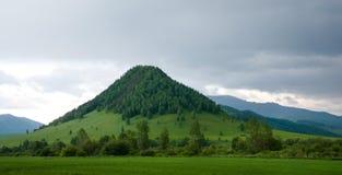 Kullen som är bevuxen med skogen Royaltyfri Fotografi