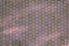 Kullersten och moss Royaltyfri Fotografi