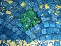 Kullerstengata, med grönt gräs arkivfoton