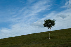 kulllandskap Fotografering för Bildbyråer