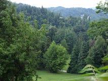kulltrees Royaltyfri Fotografi