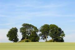 kulltrees Royaltyfria Bilder