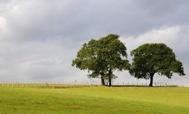 kulltrees Royaltyfri Bild