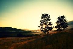 kulltrees två Soluppgånglandskap Otta i äng Royaltyfri Fotografi