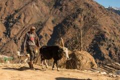 Kullu, Himachal Pradesh, India - 21 dicembre 2018: Pastore con il cane e la mucca fotografie stock libere da diritti