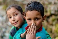 Kullu, Himachal Pradesh, Indien - 4. Februar 2019: Foto des Himalajakindes im Himalaja lizenzfreie stockbilder