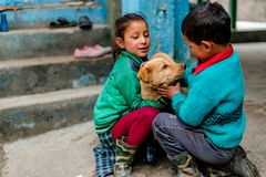 Kullu, Himachal Pradesh, Indien - 4. Februar 2019: Indischer Hund mit Kindern in Himalaja-Bergen, Himachal Pradesh stockfotografie