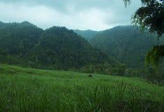 Kulon Progo 1 2 3. Nature in Kulon Progo, Middle Java, Indonesia, South East Asia, Asia, Earth stock photography