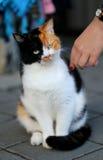 Kulör katt tre Arkivfoto