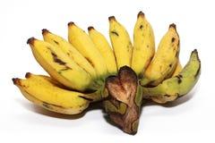 Kultiverad banan Arkivfoton